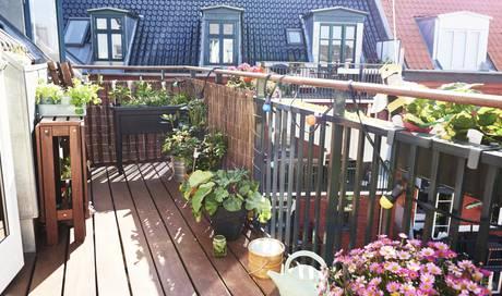 die besten balkonpflanzen f r jede saison wohnen leben und stil dossier az aargauer zeitung. Black Bedroom Furniture Sets. Home Design Ideas