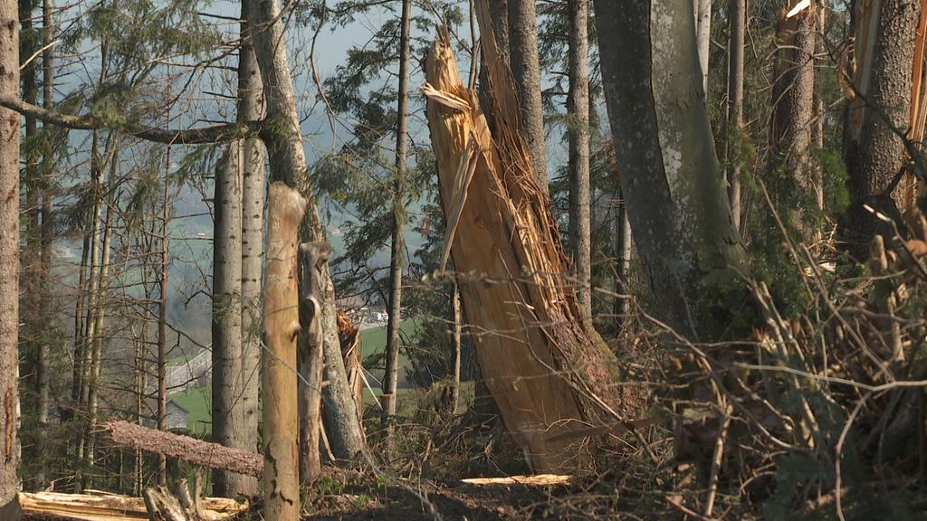 Die Sturmschäden von «Vaia» sind immer noch sichtbar.