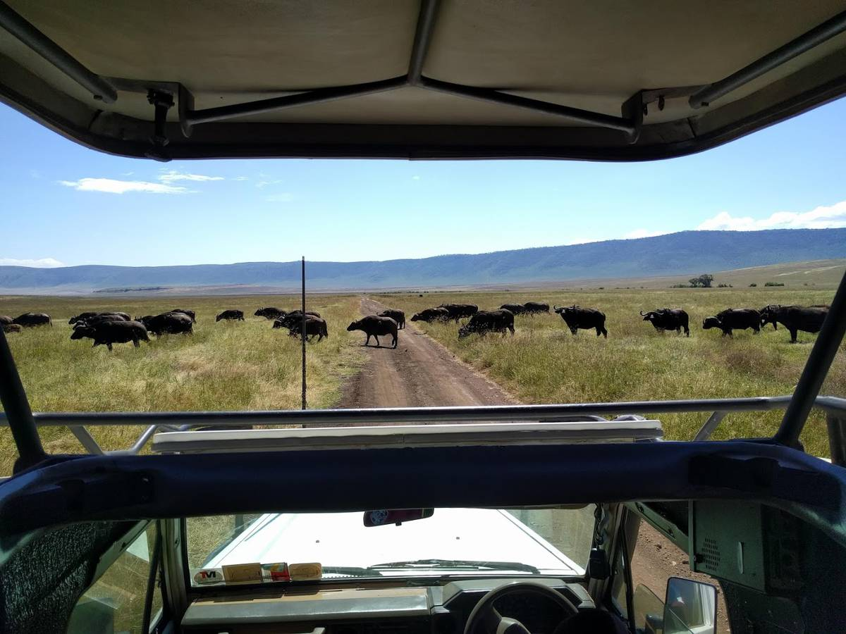 ngorongoro2 (© Radio Argovia)