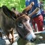 Tierischer Waldspaziergang der Freizeitanlage Chrüzacher Dietikon