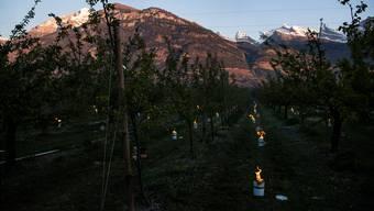 Mit Frostkerzen (Bild) und Feuer versuchen derzeit viele Obstproduzenten, die Temperatur auf ihren Plantagen zu erhöhen. Keystone
