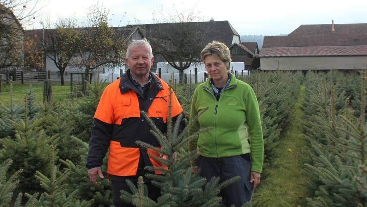 Heidi und Peter Sperisen inmitten ihrer Weihnachtsbäume.