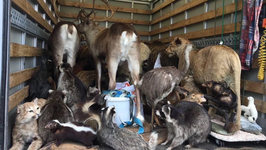 Ungewöhnlicher Tier-Transport