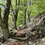 Der Buchenwald der Valli di Lodano, Busai und Soladino soll in die Liste des Unesco-Weltnaturerbe aufgenommen werden. (Archivbild)
