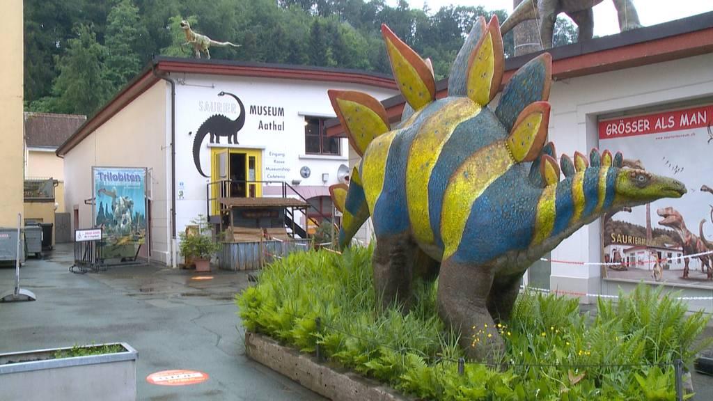 Zwischenbilanz Sauriermuseum: Weniger Besucher als vor Corona