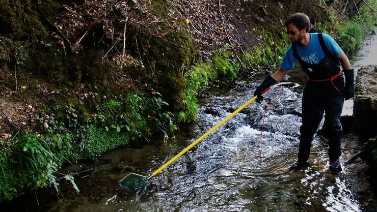 Die Jagd- und Fischereiverwaltung bemüht sich, in den tieferen Stellen der Bäche die dort zusammengerückten Fische zu retten, bevor denen der Sauerstoff ausgeht und das Restwasser zu warm wird. (Symbolbild)