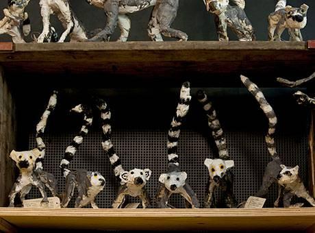 Tiere für die Ewigkeit - Dokumentation eines Bastelworkshops am Zoologischen Museum