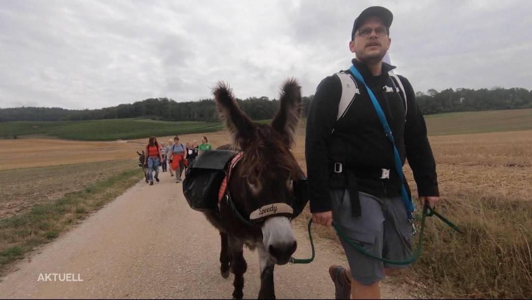 Zwei Esel im Aargau: Speedy und Bisang sind wieder unterwegs