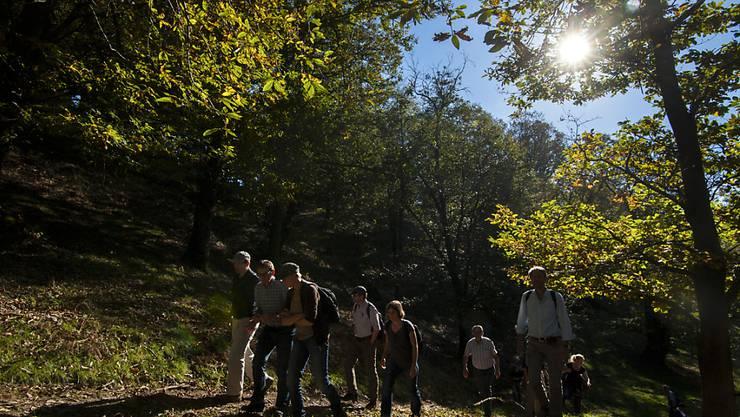 """Die Wanderroute """"Sentiero delle Meraviglie"""" im Malcantone ist bei den Nutzern der App """"hikeTicino"""" am beliebtesten. (Symbolbild aus dem Malcantone)"""