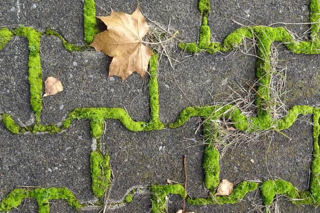 Die Natur übernimmt langsam den Boden einer stillgelegten Bushaltestelle auf dem Land