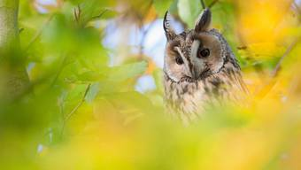 Junger Baselbieter Fotograf gewinnt Preis der Vogelwarte Sempach