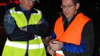 Polizekommandant Stephan Reinhardt und Polizeidirektor Urs Hofmann begutachten ihre Beute: Urs Hofmann hält einige Stängel der Rauschgiftpflanze Khat in den Händen.