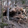 Holz liegt in unseren Wäldern bereit zum Verwerten. (Lupsingen, 13.Januar 2021)
