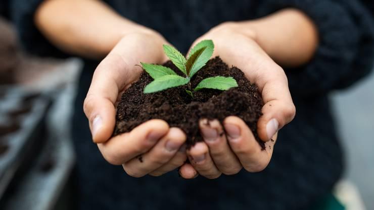 Gemäss dem Ökozentrum Langenbruck habe Pflanzenkohle hat ein riesiges Potenzial für die Reduktion von Treibhausgasen. (Symbolbild)