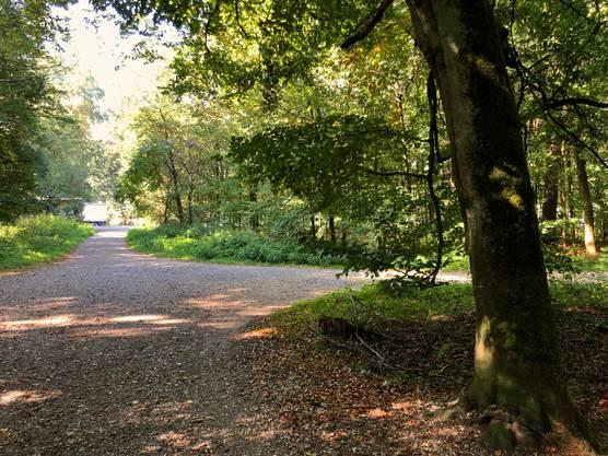 Schon Nahe der Hauptstrasse liegt die erste Waldwegkreuzung.