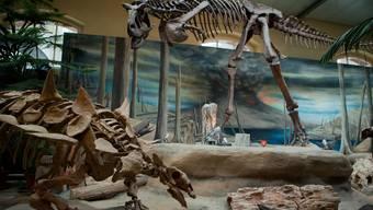 Mit dem Geld kann das Museum eine neue Ausstellung über Meteoriten und das Ende der Dinosaurier finanzieren. (Archiv)