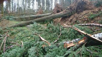 Das Aufräumen ist nicht nur arbeitsintensiv, sondern auch anspruchsvoll: Im Forstbetrieb Region Seon hat «Burglind» eine ganze Jahresnutzung Holz zu Boden geworfen.