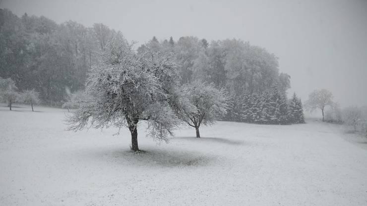 Winter auf dem Homberg