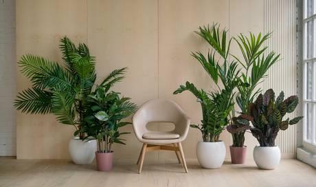 Gr ne detox helden warum zimmerpflanzen weit mehr als nur staubf nger sind wissen az - Zimmerpflanzen groay ...