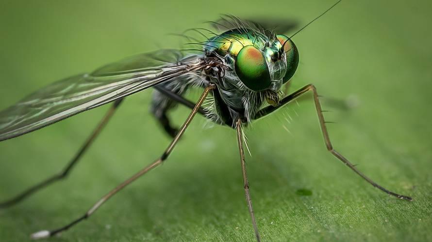 Der Insektenschwund ist schlimmer als gedacht