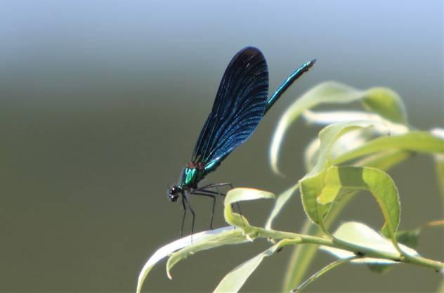 Libelle beim Sonnenbad.