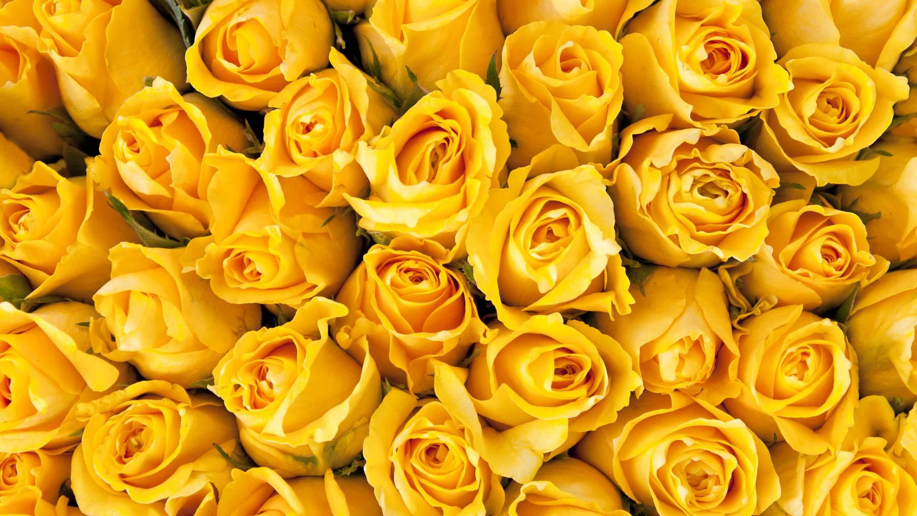 Ein Unbekannter schickte 300 gelbe Rosen an die Konstanzer Polizei. (Symbolbild)