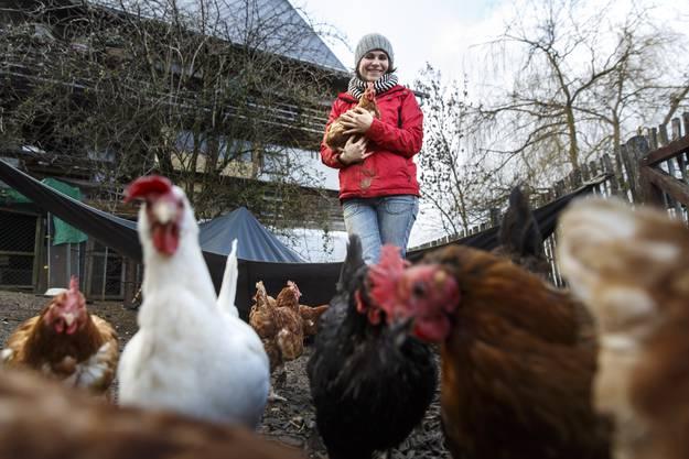 50 Hennen leben auf dem Gnadenhof; Eier legen müssen sie nicht mehr.