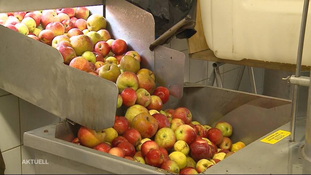 Besonders frühe Apfelernte: Was bedeutet das für die Süssmostproduktion?