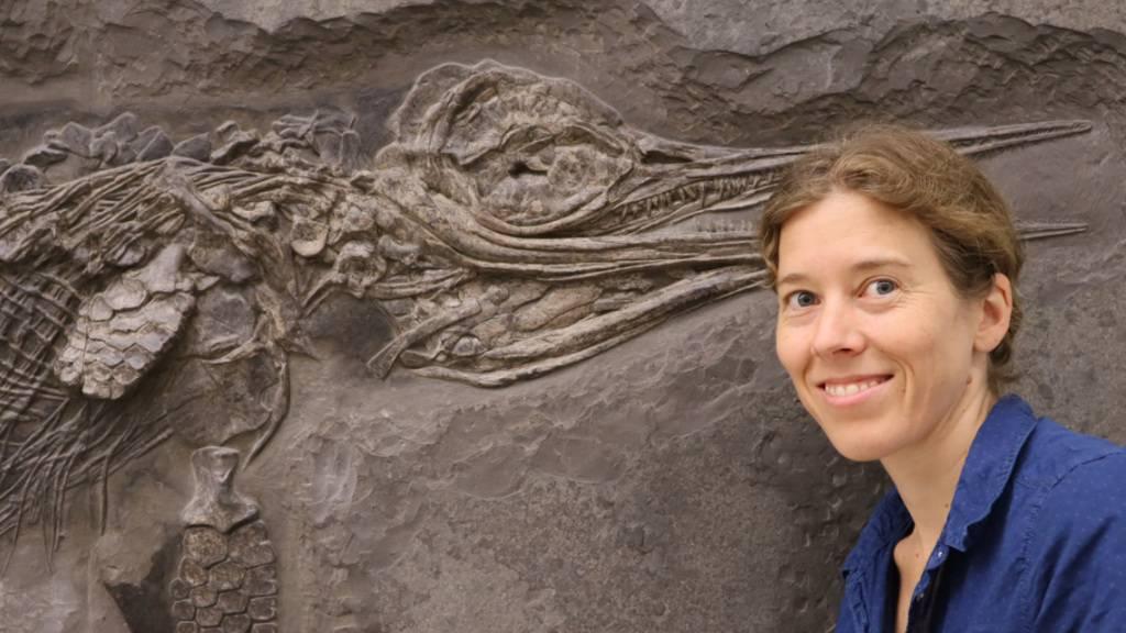 Neuer Fischsaurier-Art aus dem Schwäbischen Jurameer