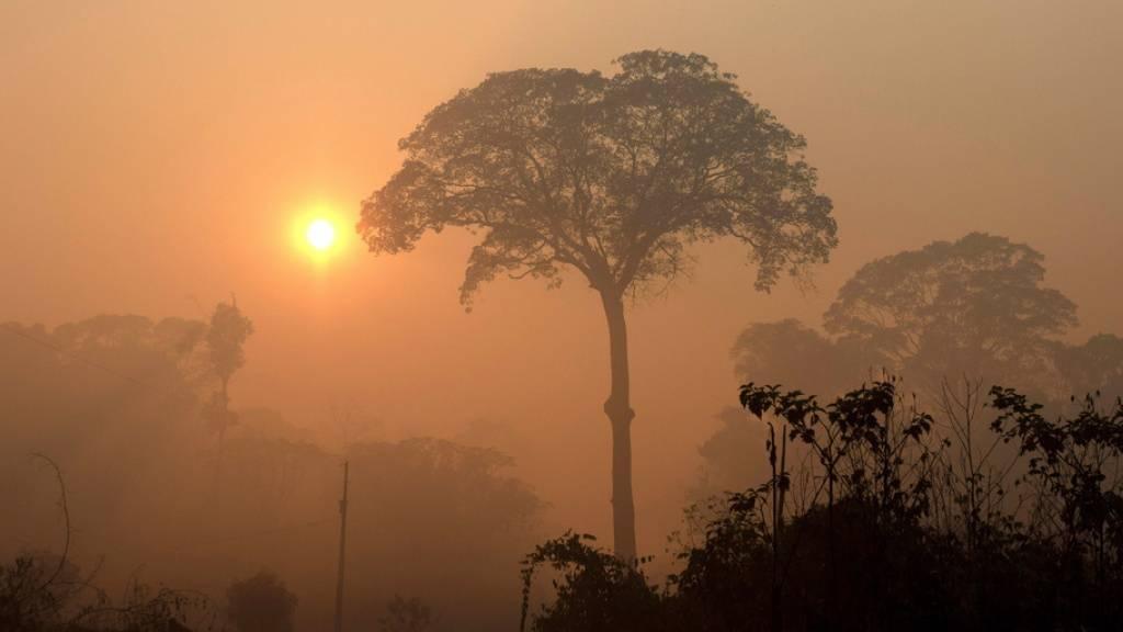 Am Sonntag ist Tag des Waldes. Anlass, die Abholzung im Amazonas-Gebiet in den Fokus zu rücken. Jüngste Zahlen sollen belegen, dass weniger Brandrhodung betrieben wird. Doch das beruht auf optischer Täuschung: Wegen schlechtem Wetter waren die Brände vom Satelliten aus nicht sichtbar. (Archivbild)