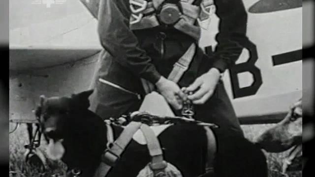 Die Rega wollte Hunde auch bei Fallschirm-Rettungen einsetzen. Ein Absprung aus dem Flugzeug samt Hund – das hatte vorher noch niemand ausprobiert. Die Rega-Pioniere erzählen.