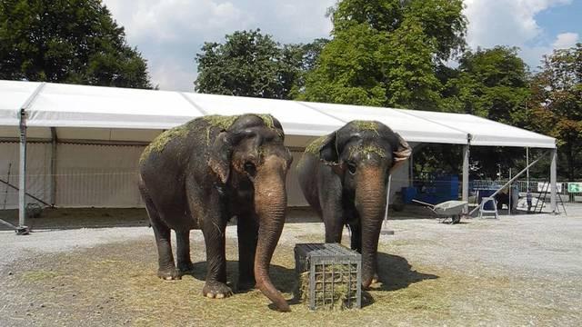 In Zukunft werden die Elefanten nicht mehr in der Manege vom Zirkus Knie auftreten. Was sagen Besucher der Vorstellung in Solothurn dazu?