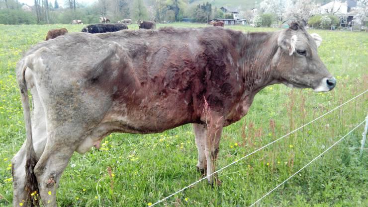 Um die Tiere auf dem Boninger Bauernhof stand es schlecht. (Archiv)