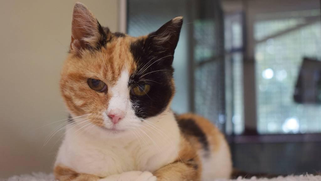 Happy End: Katze Georgie nach 12 Jahren wiedergefunden