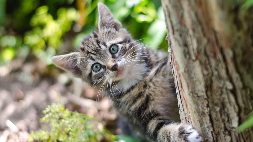 «Bringt euren Katzen Beutetiere nach Hause», rät die Katzenpsychologin