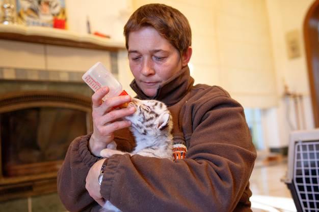 Alle paar Stunden gibt es Katzenaufzuchtmilch.