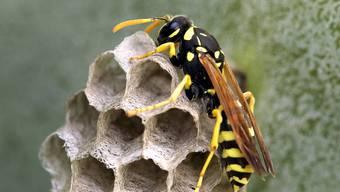 Ein Wespenstich auf der Terrasse – Koch ist Schuld, er behauptete, frische Luft sei wichtig. Jetzt ist er weg - Zeit für neue Feindbilder.