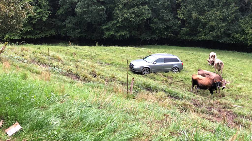 Autofahrer landet mit fast zwei Promille auf Kuhwiese