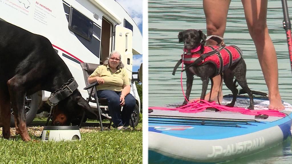 Mit dem Hund in die Ferien / Badeplausch