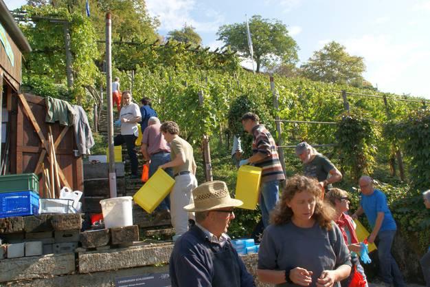 Die Helferinnen und Helfer fassen ein Kistschen und dann geht ab in die Reben