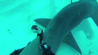 Mit dem Hammerhai schwimmen ...