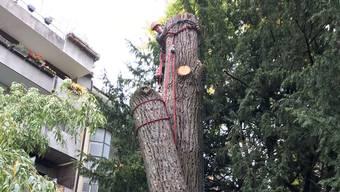 Ein Baum wird zersägt und abtransportiert, wie schon so oft in Basel im laufenden Jahr: Liegenschaftsbesitzer fackeln nicht mehr lange – sie wollen kein Risiko eingehen.