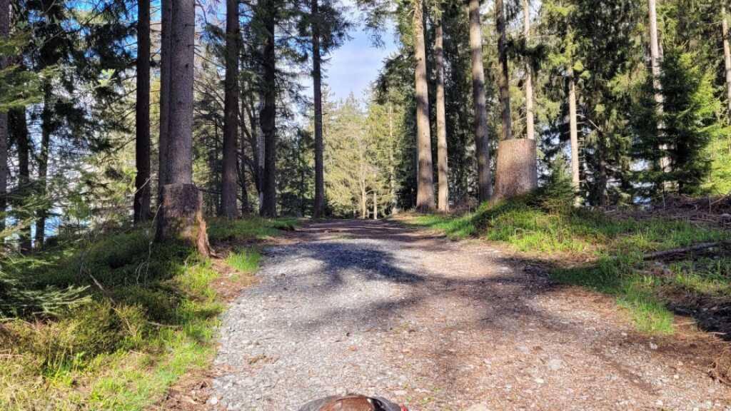 Der tote Auerhahn wurde auf einer gesperrten Waldstrasse aufgefunden.