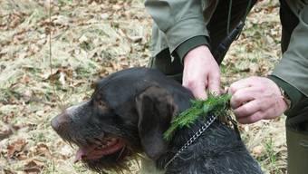 Hundehalter werden angehalten, ihre Vierbeiner an der Leine zu führen (do)
