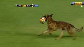 Der Polizeihund hielt Spieler, Schiedsrichter und Sicherheitskräfte zum Narren.