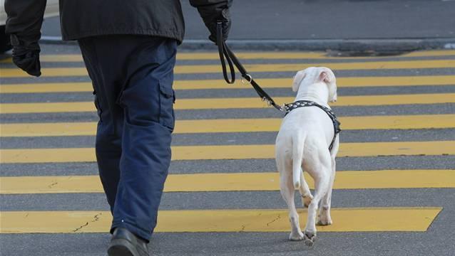 Auf seinen Rundgängen durch die Quartieren begegnet der Stadtbummler auch immer wieder Hunden. (Archiv)