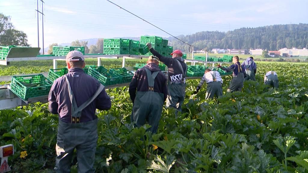 93 % der Bio-Felder verseucht mit Pestiziden
