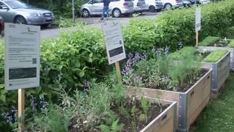 Garten jeden ist ein Gartenprojekt, das anbau von Nutzpflanzen födert. Hier vom letzten Jahr ein Hochbeet im Brisgi zwischen den Blöcken.