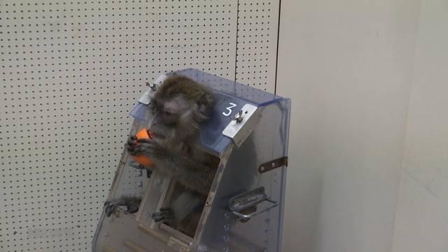 Macht Uni Freiburg Affen kokainsüchtig?