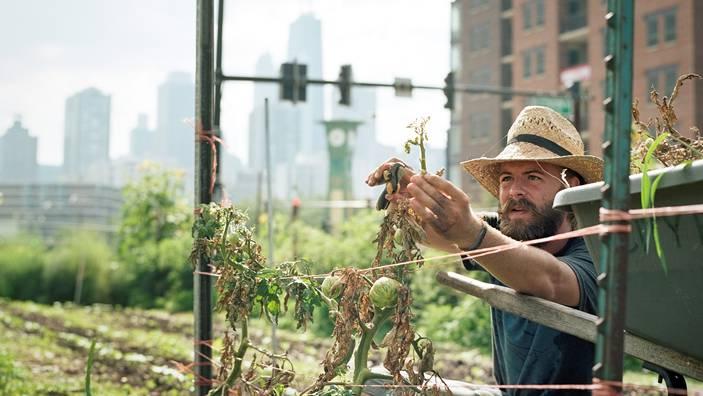 Tomaten schneiden und Zucchetti ernten auf einem Dach mitten in der Skyline von Chicago – Urban Agriculture ist hip und innovativ.